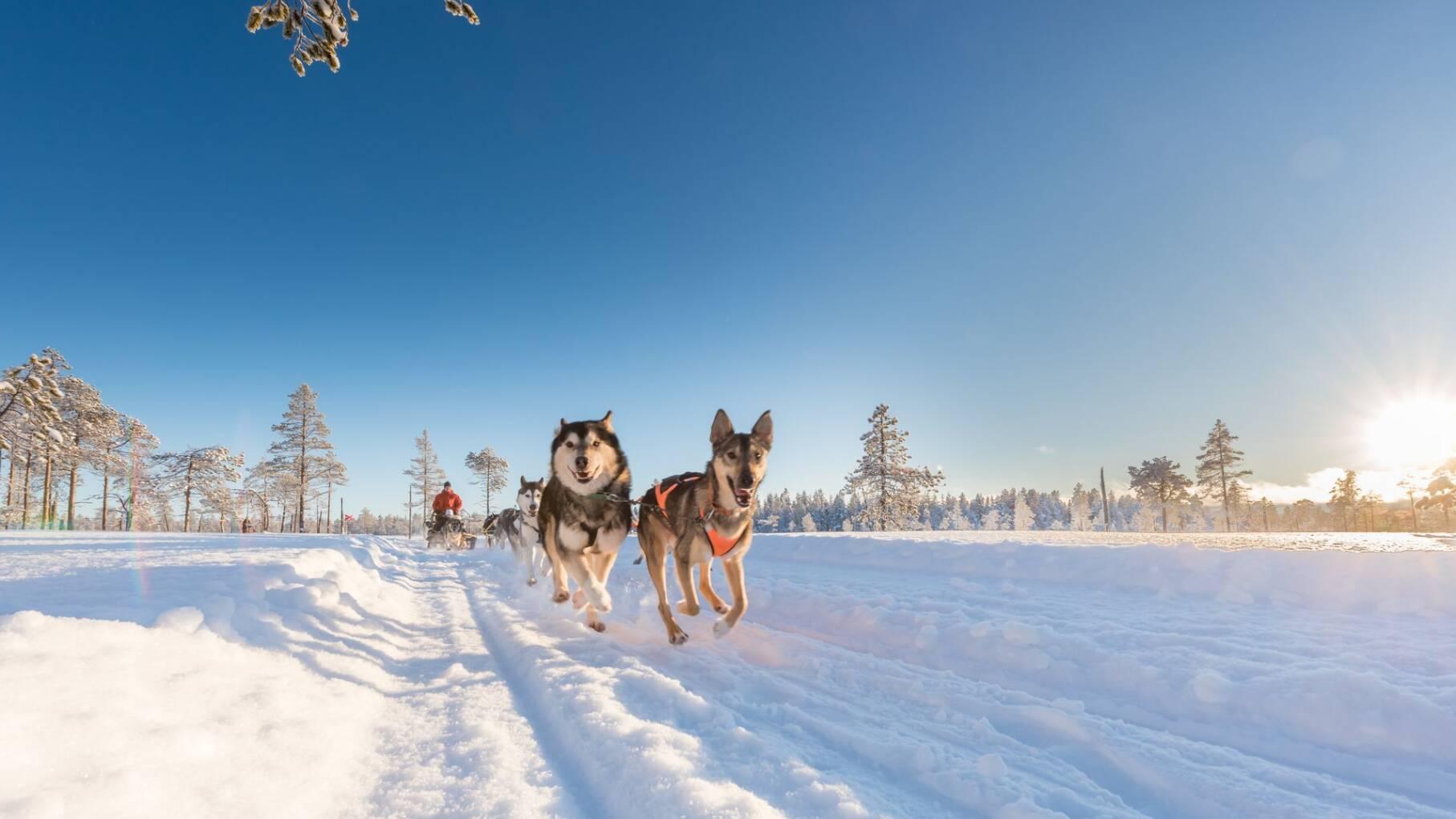 Winter Adventure Zweden - Zweden - 1