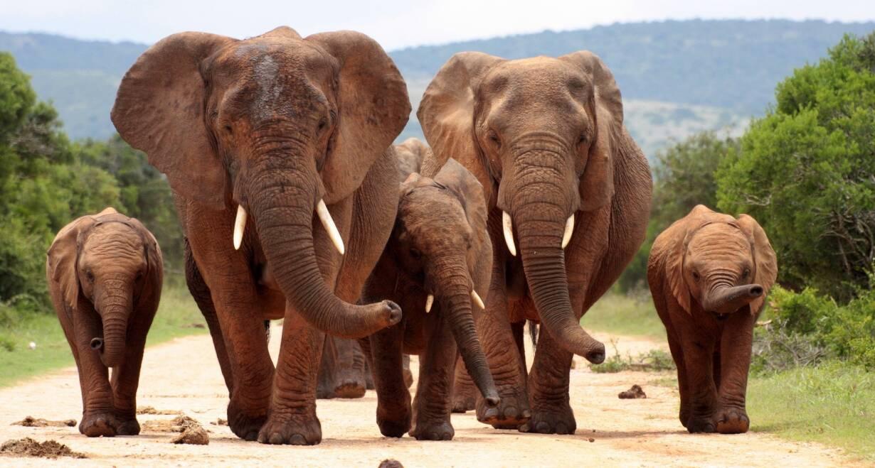 Fly & Drive Zuid-Afrika: Krugerpark, Swaziland en de Drakensbergen - Zuid-AfrikaKrugerpark (160 km)